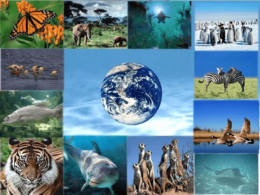 Ô nhiễm môi trường là gì? Các loại môi trường sống